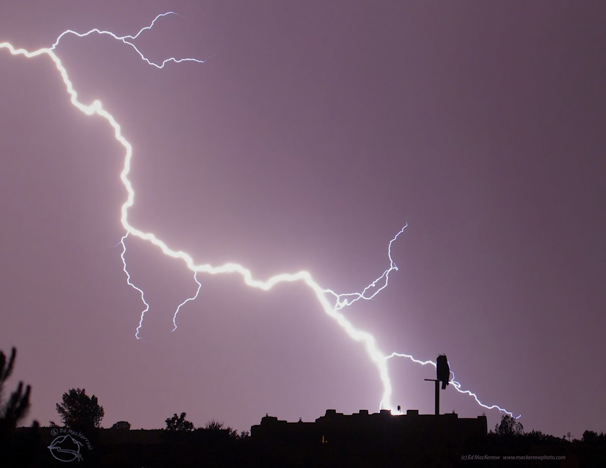 Great Horned Owl watches Lightning Show