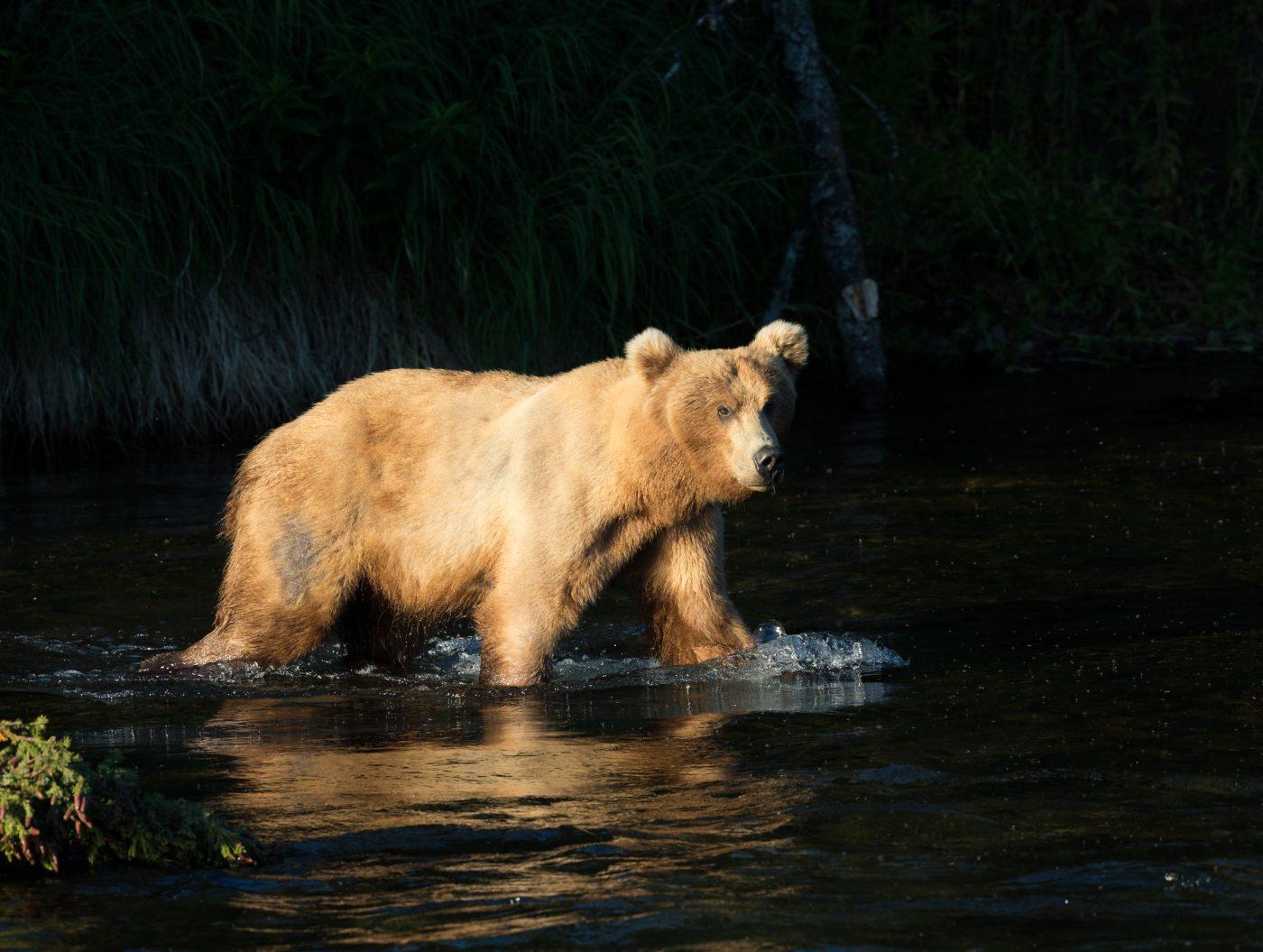 Golden-Bear-Gallery