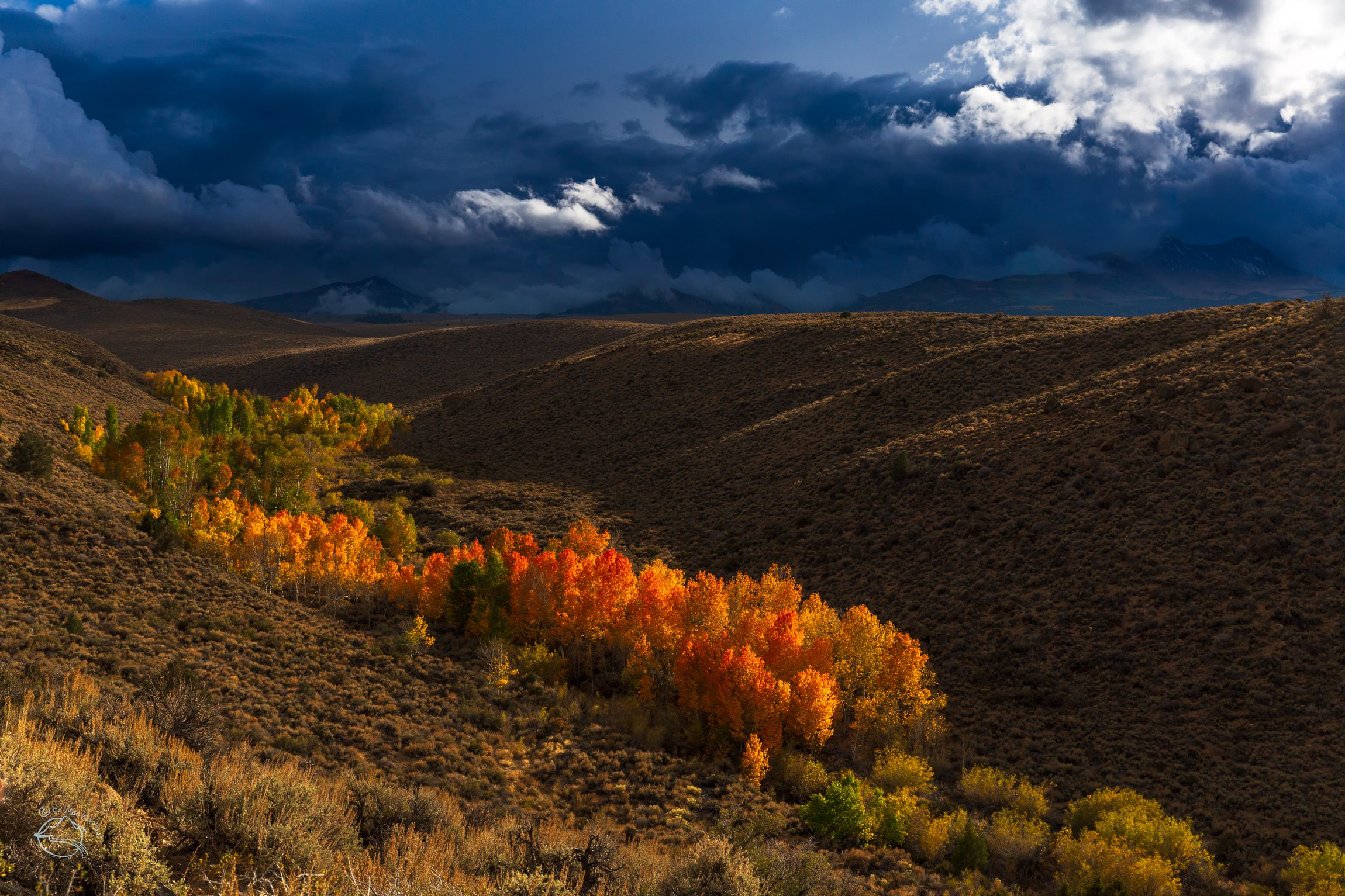 Red, orange, and yellow aspen trees in the Sierra Nevada.