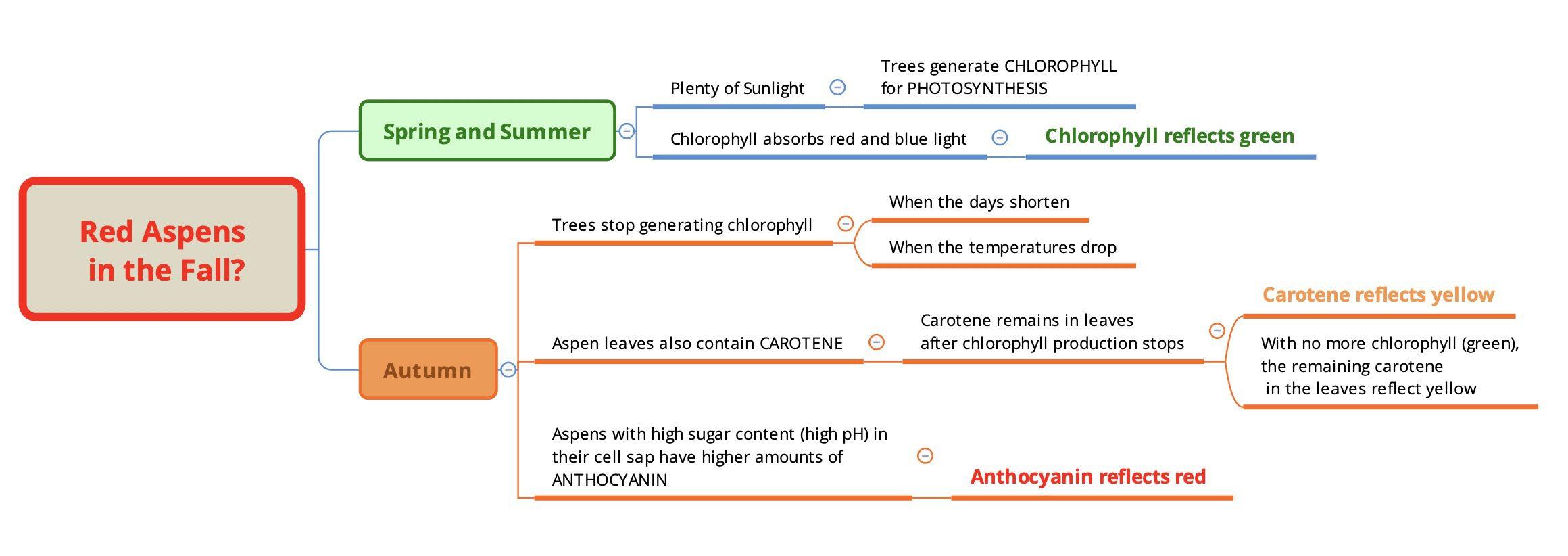 Diagram explaining why some aspen trees turn red